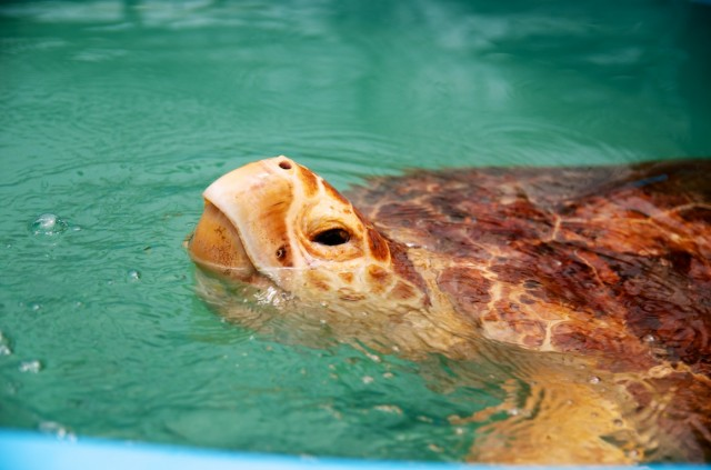 down syndrome child florida turtle hospital vacation 3