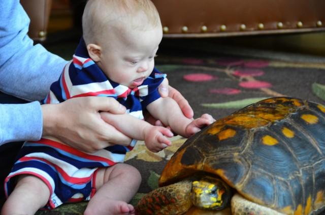 cheyenne mountain resort zoo colorado springs zoo turtle