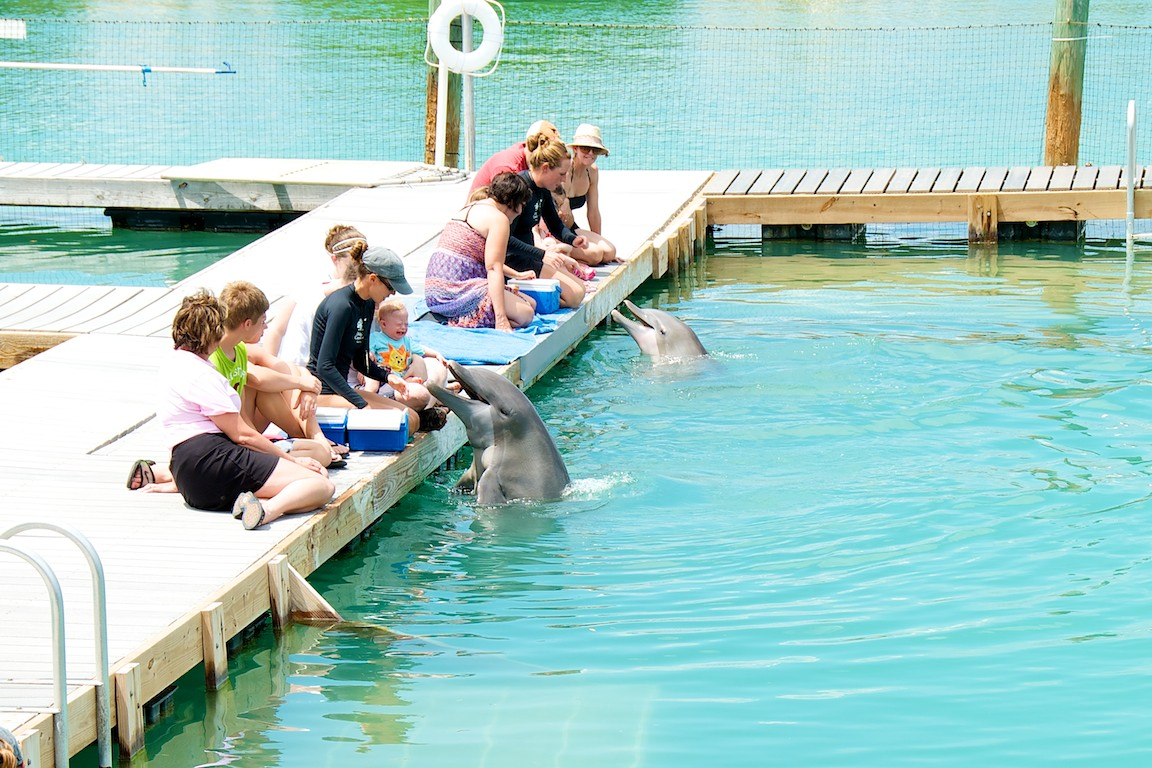 afraid baby with dolphins florida keys dolphin connection