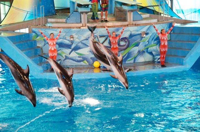 sea world special needs discounts