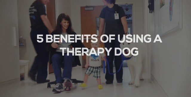 5 Benefits Of Using A Therapy Dog When Learning To Walk