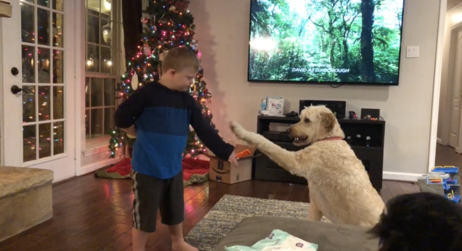 child with special needs teaching dog to shake