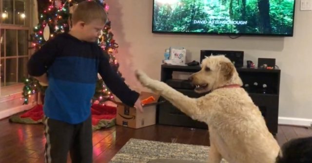 down syndrome child dog training goldendoodle doodles dog